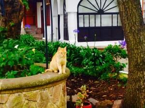 El gato de Cheshire del Centro Cultural.
